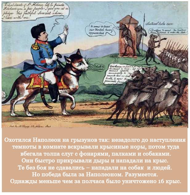 Наполеон и крысы