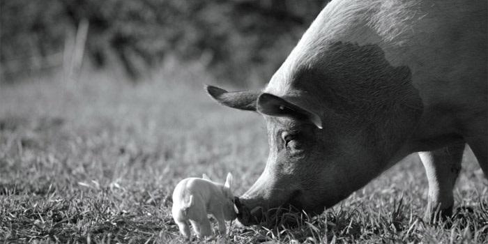 «Послание к человеку»: полюбите зверей, как самих себя